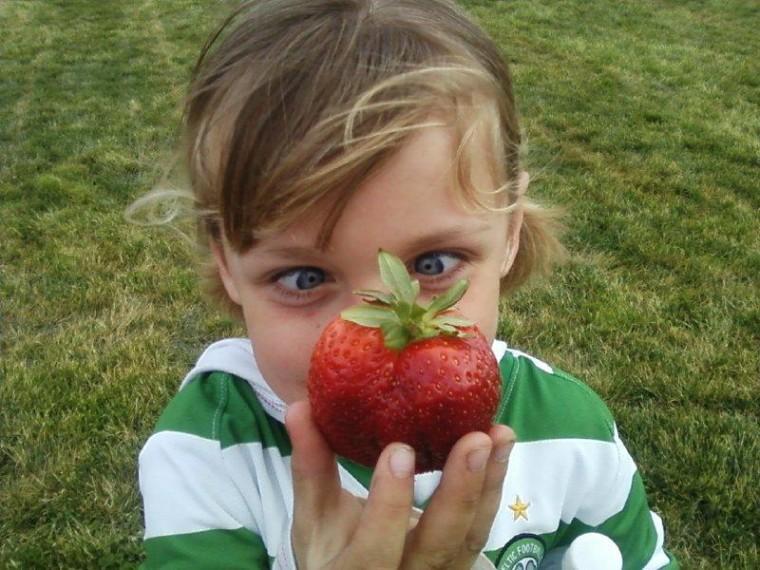 Holy Strawberry!!