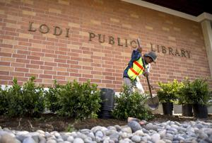 Lodi Public Library gives landscaping a makeover