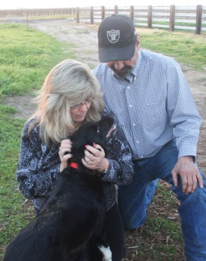 After Eight Months Roaming Thornton Vineyards, Fiona The Border Collie Is Reunited With Her Family: Becky Thomas and Fred Dutra share a tender moment with Fiona on their eastern Acampo ranch. Fiona, a 3 1/2-year-old border Collie, was missing in the wild for eight months near Interstate 5.  - Ross Farrow/News-Sentinel