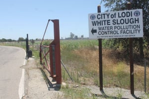 Walmart to buy Lodi farmland