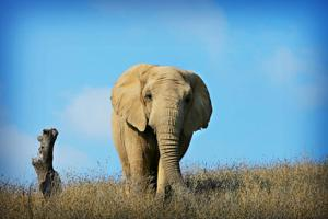 Bob Barker paying up to $1 million to send trio of elephants to PAWS in San Andreas