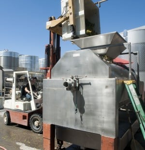 Stomping fresh grapes into Chardonnay