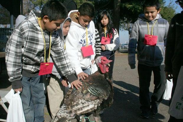 AgVenture educates San Joaquin County youths