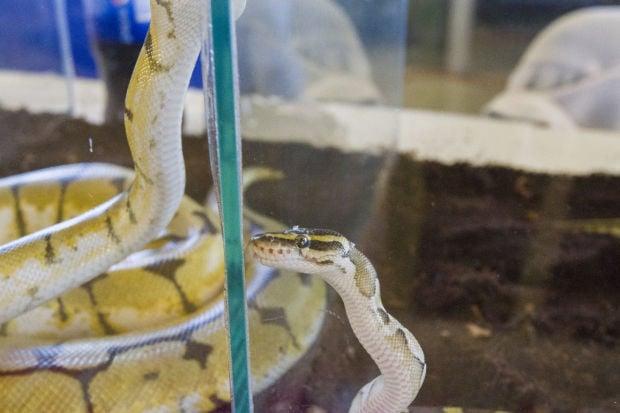 World of Wonders Science Museum hosts Reptile Roundup
