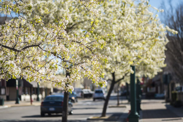 Looking like spring in Lodi