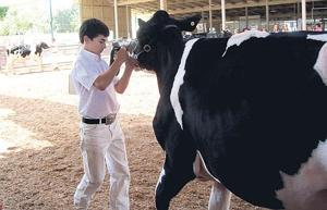 Livestock winners at the San Joaquin Fair