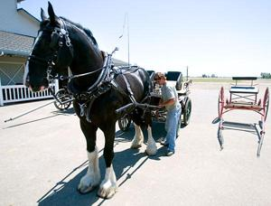 Local horse center specializes in Clydesdales