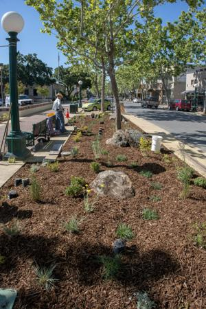 Volunteers work to create garden in Downtown Lodi