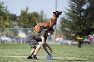 Jumping for joy: California dogs go for a state title in disc competition
