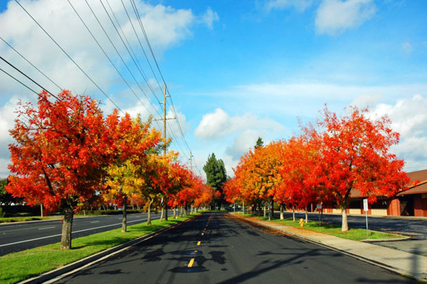 Lodi trees change their colors for autumn