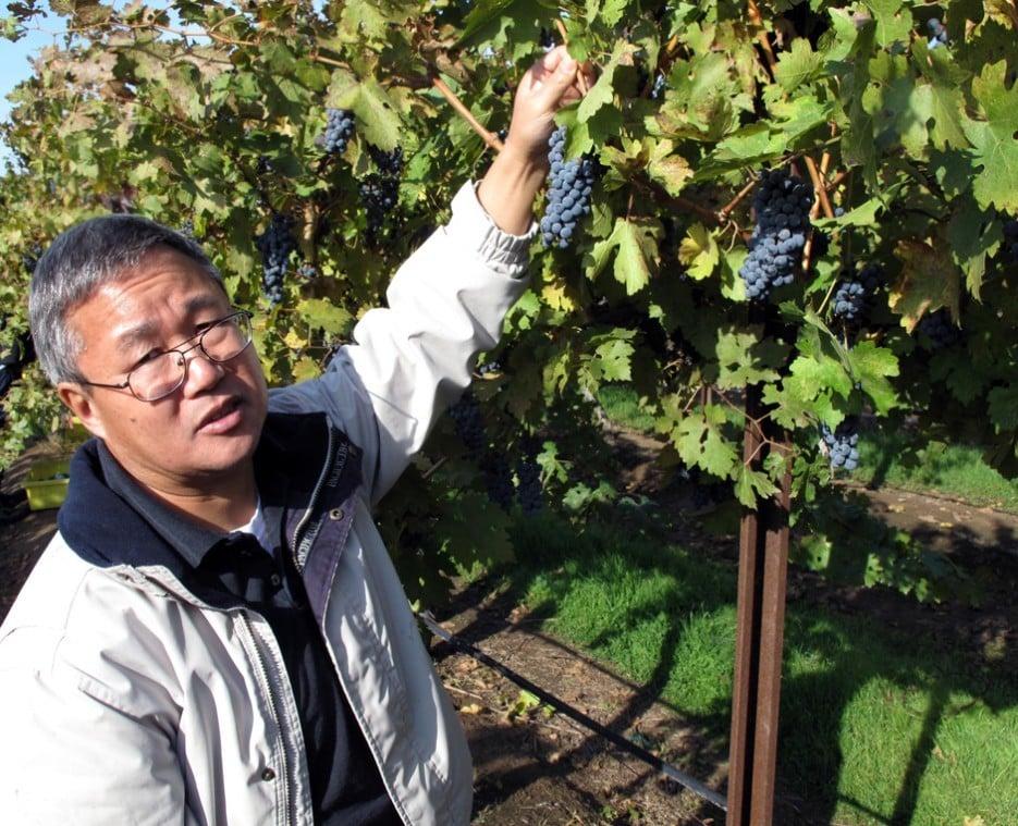 Fresno professor works to grow a later, tastier grape