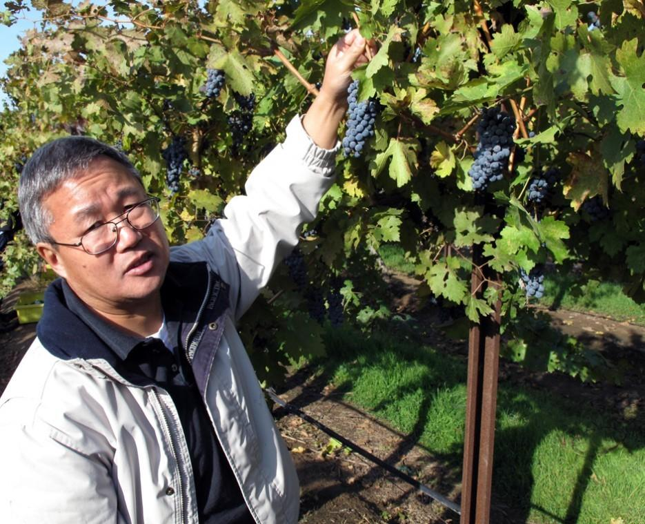 Fresno professor works to grow a later, tastier grape