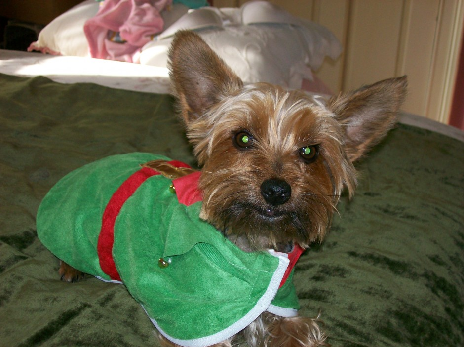Gizmo on Christmas 2009
