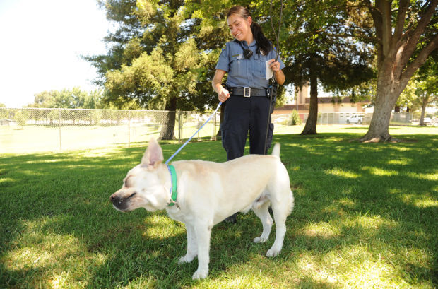 A day in the life of the Lodi Animal Shelter