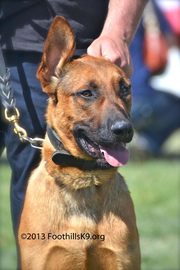 New dog purchased for Galt Police Department