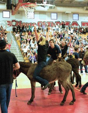 Galt donkey ball game a hee-hawing good time