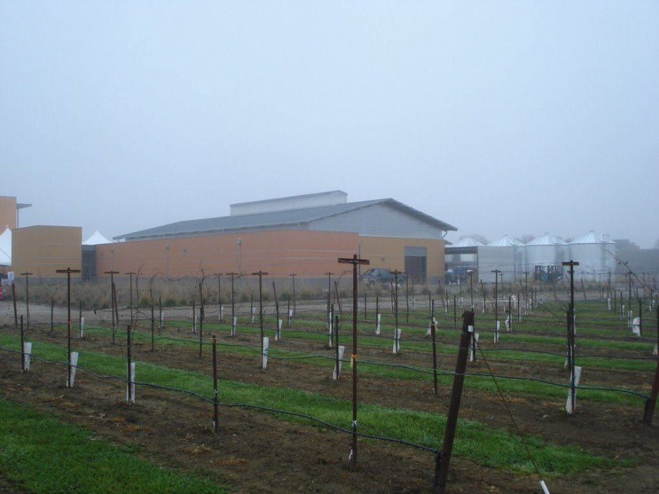 The Robert Mondavi Institute's new winery