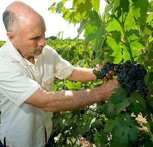 Local winegrowers worried rain could damage crops