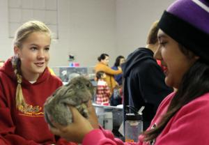 Hobbyists and students bring their rabbits to show in Lodi