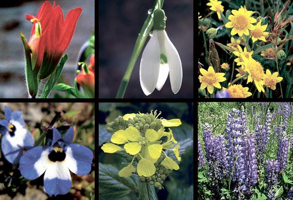 From Galt to the Bay, wildflowers are bursting with color in pastures and state parks