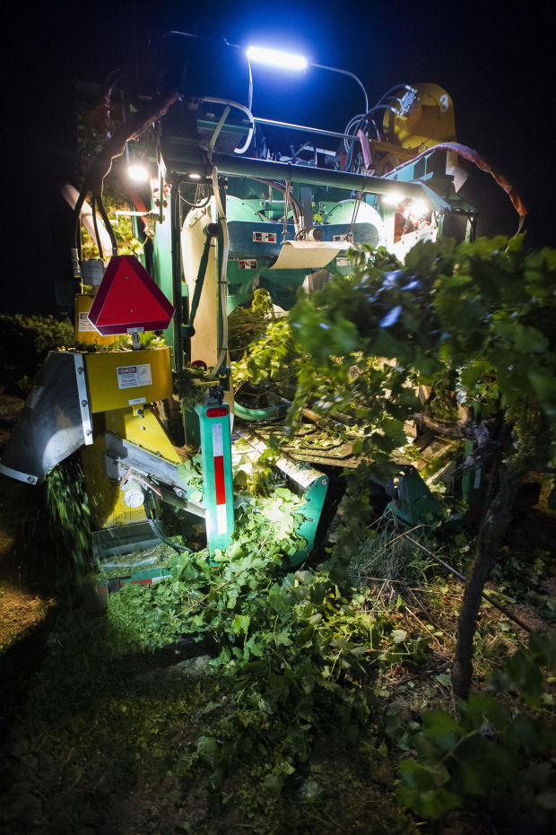 Lodi-made machines rumble through vineyards as grape harvest begins