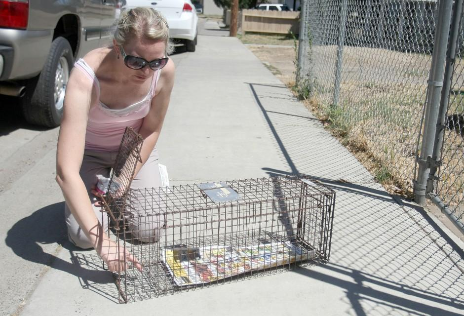 Trap and release program saves money, cats' lives