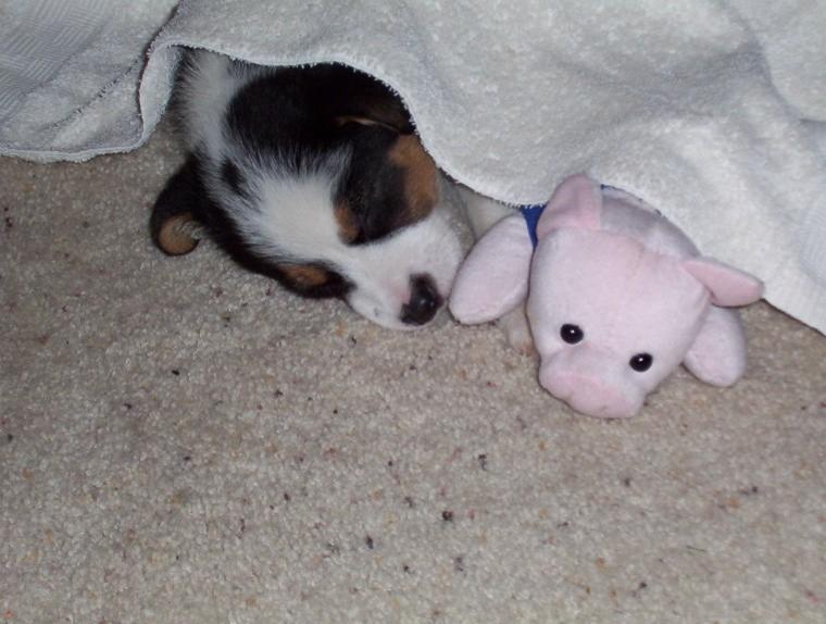 Oliver and his piggy