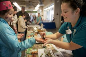 World of Wonders Science Museum hosts Bugology event