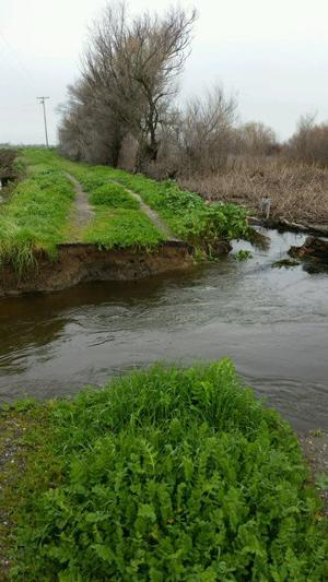 Levee break reported at White Slough west of Lodi