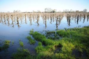 Local floods are having a lasting effect on agriculture industry