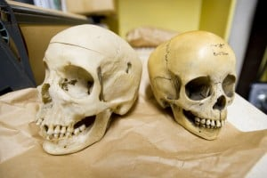 Local store sells human skulls on eBay