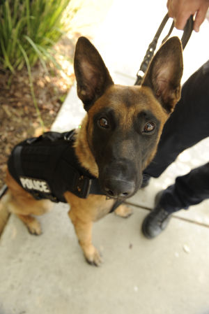 Galt police dogs get bulletproof vests thanks to donation