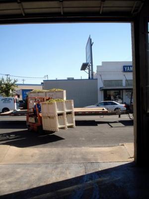 Unloading Borra Viognier