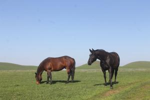 Rush Ranch west of Lodi offers beautiful areas to hike and explore