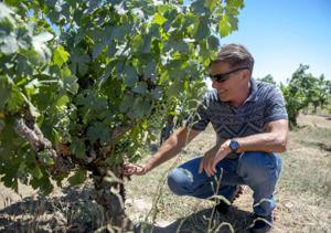 Lodi's Bechthold Vineyard named best in California