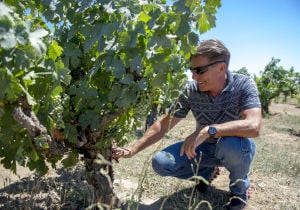 Lodi's Bechthold Vineyard named best in state