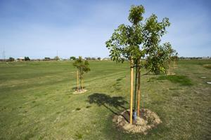 Tree-planting at DeBenedetti Park to mark Arbor Day; honoree will attend
