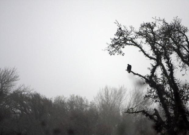 Galt Winter Bird Festival