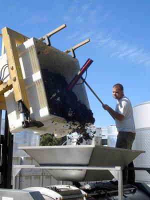 A half ton of Cinsault is helped into the press
