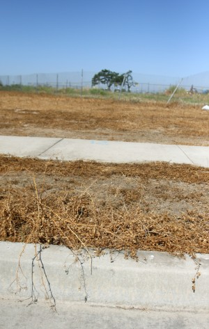 DeBenedetti Park moving forward despite brown weeds