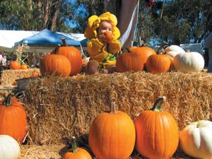 Hop on a train to a secluded Pumpkin Patch Festival