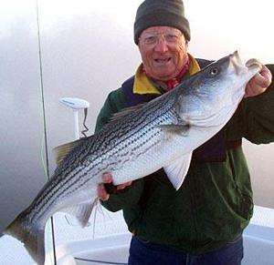 Proposed bill to remove limits on striped bass pitting fishermen against farmers