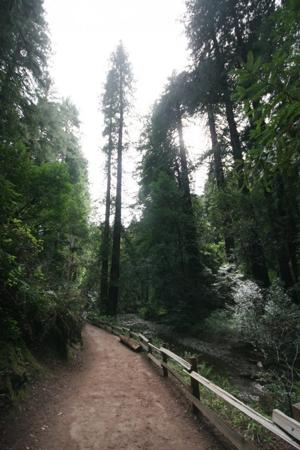 Visit Muir Woods to stimulate the senses