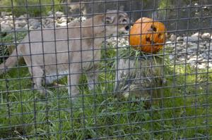 Micke Grove Zoo gets in the Halloween spirit