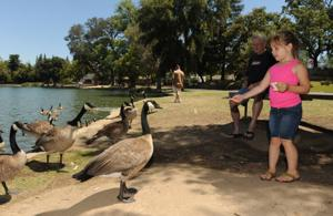 Lodi City Council seeks solutions to flap over goose droppings at Lodi Lake