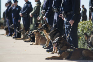 Fallen Galt Police Officer Kevin Tonn Laid To Rest : Dozens of K-9 officers line the path as people arrive for the funeral of Galt Police Officer Kevin Tonn at Adventure Community Church in Roseville on Monday, Jan. 21, 2013.  - Dan Evans/News-Sentinel