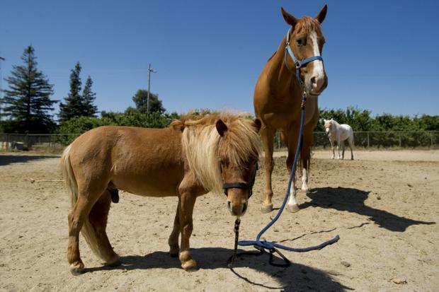 Mini horses bring big smiles to local kids