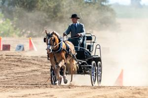 Skilled drivers show talents at Golden State Combined Driving competition