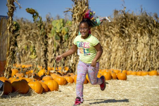 Phillips Farms pumpkin patch