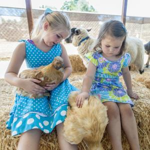 'Dolly Llama' and other critters hang out at San Joaquin County Historical Museum